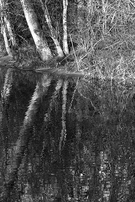 Hueston Woods Creek Reflections