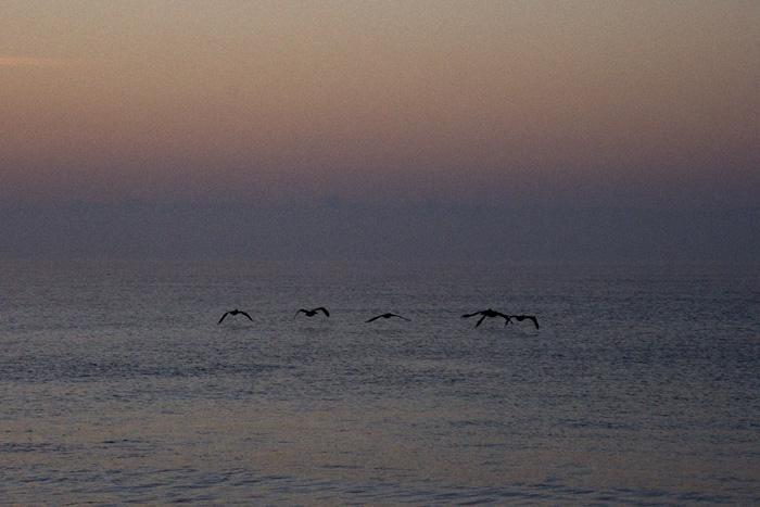 20071216151800_oak island birds.jpg