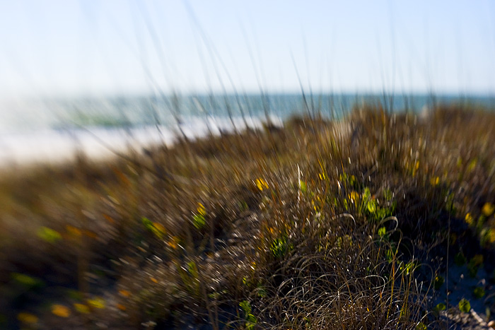 Oak Island Beach Grasses