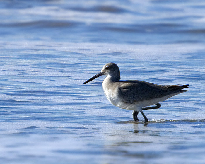 20080117173714_shorebird1_w.jpg