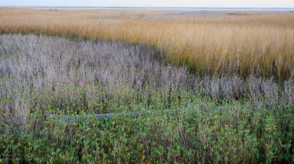 Fort_Fisher_Marsh3_Nick_Noble