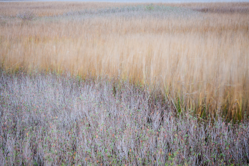 Fort_Fisher_Marsh_Nick_Noble